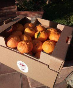 mandarini-extra-sicilia-gianferrante