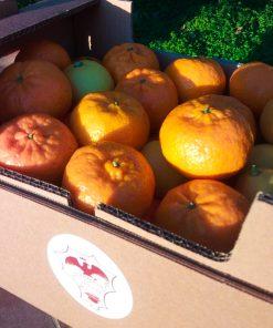agrumi misti di sicilia gianferrante arance mandarini limoni