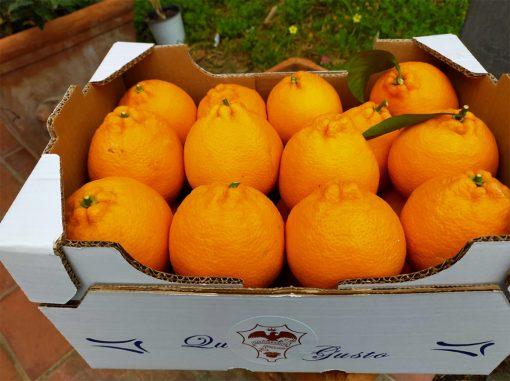 arance rosse tarocco extra sicilia gianferrante