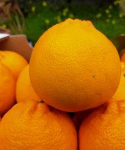 Arancia Tarocco sicilia cassetta 15kg